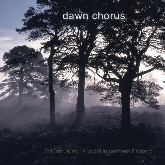 Dawn Chorus  (2004)