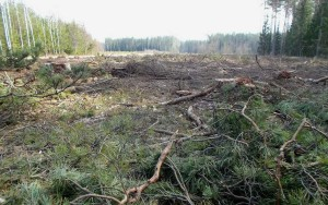 clear-felled forest